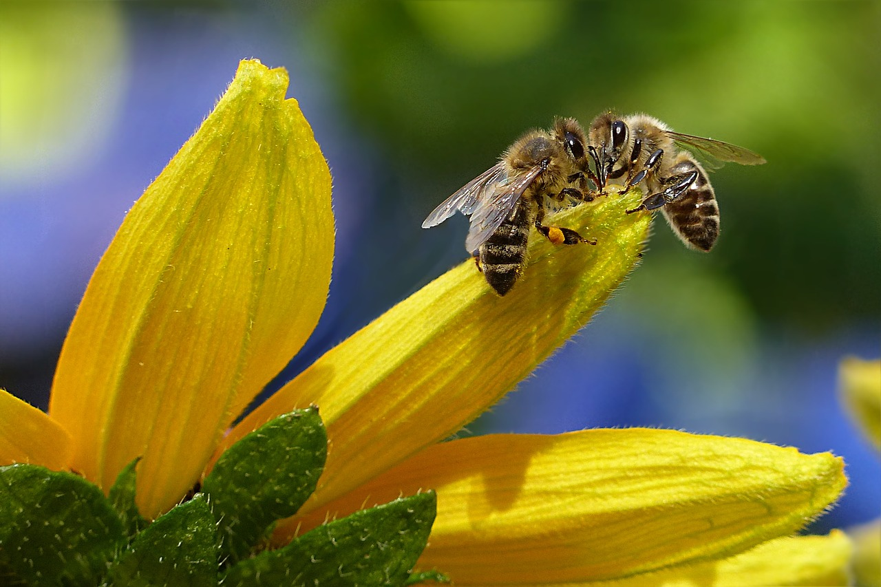 Salvaguardia delle api